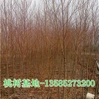 桃树价格,供桃树2-3-4-5-6公分桃树低价直销,桃树基地