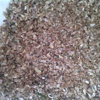 香椿种子价格,河南香椿种子价格,鄢陵香椿种子价格