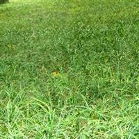 沭阳恒景园林长期提供细叶麦冬草
