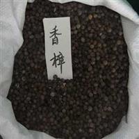 大量供应江苏香樟树种子,种苗