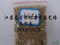 江苏一年生黑麦草信息
