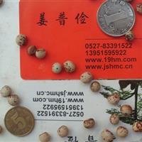 长年邮寄猪屎豆木豆种子胡枝子柠条种子刺槐臭椿紫穗槐种子价格