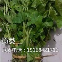 自产自销水生植物草花蜀葵,量大从优