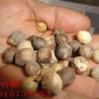 厂家直销 新采优质假槟榔种子 发芽率高 易成活 质量保障