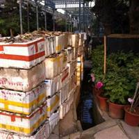 杭州萧山大量供应,睡莲,荷花,1000万棵,低价出售。