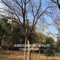 安徽合肥棠梨介绍、合肥棠梨图片、肥西杜梨供应商