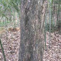 安徽肥西供应青檀树、紫檀价格、黄檀报价、肥西檀树价格