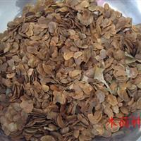 木荷种子、木荷种子价格