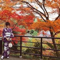 日本红枫娜塔枫百度百科-日本红枫娜塔枫百度图片-日本红枫基地