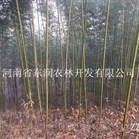 河南桐柏大量供应竹子,斑竹、毛竹、桂竹等 2016低价供应