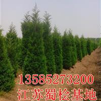 H2米高蜀檜價格,2米高度蜀檜柏價格,產地直銷2米高塔柏價格