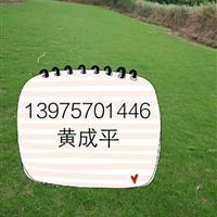 批发马尼拉丨中华结缕草