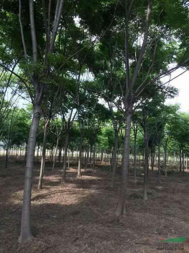 杭州萧山绿林园艺场