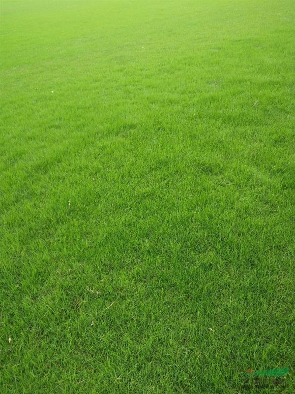 句容市后白褔源农场草坪基地