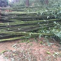 佛肚竹、凤尾竹、箬竹、淡竹、铺地竹、金丝竹、菲白竹、罗汉竹