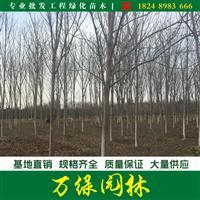 红花七叶树价格_七叶树图片_七叶树产地_七叶树绿化苗木苗圃基