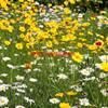 红花石蒜、睡莲、金边吊兰、矮牵牛、孔雀草、芦荟、牡丹、芍药