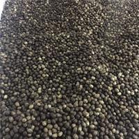 供应南酸枣种子 江西南酸枣种子批发 量大优惠