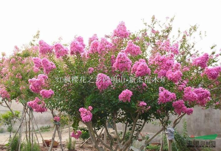 浙江省余姚市新杰苗木场