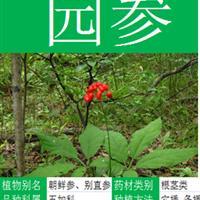 【蛇鞭菊】花卉种子  林木种子 药材种子  花卉种球