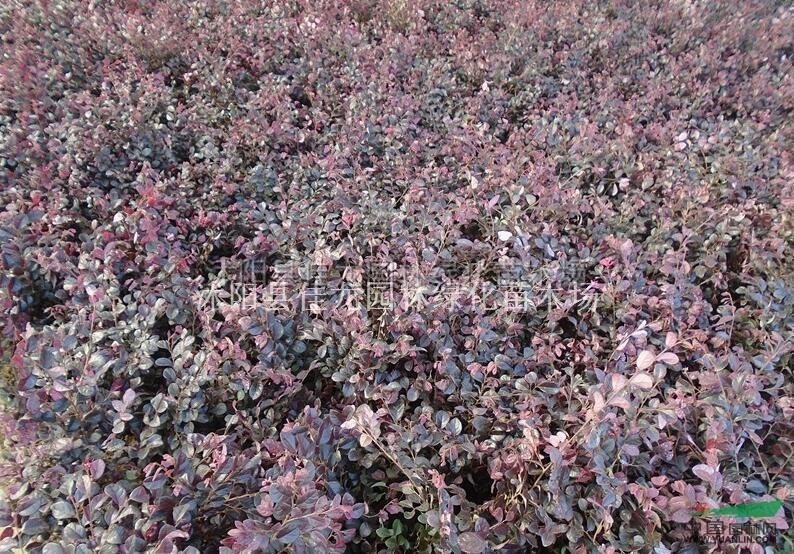 江苏红花继木信息