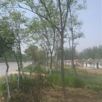 大小叶黄杨、合欢、榆叶梅、红叶小波、卫矛