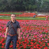 时令花卉,熏衣草,石竹,三色堇,木春菊,天竺葵