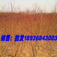 桃树江苏地区价格,桃树苗种植基地,毛桃种子报价