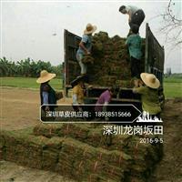 马尼拉草皮、台湾草皮、玉龙草、大叶油草皮出售