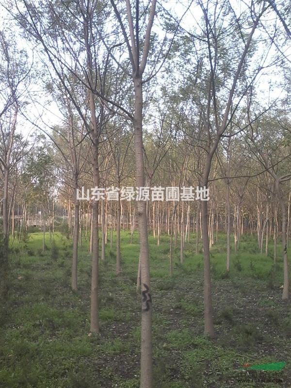山东省绿源苗圃基地