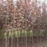 花卉类:榕树、发财树、天竺、橡皮树、杜鹃、茶花、含笑、铁树、
