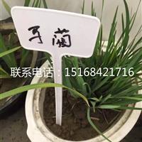 浙江最专业的水生植物供应商、品种齐全、薄利多销。马蔺