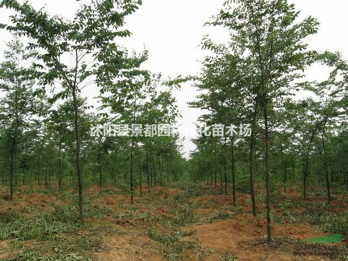 沭阳县景都园林绿化苗木场