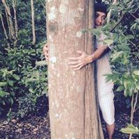 广东地区45--50公分野生沉香树