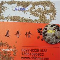 防止水土流失狗牙根紫穗槐胡枝子高羊茅三叶草四季青种子包邮