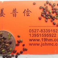 优质胡枝子紫穗槐种子、狗牙根、高羊茅种、黑麦草种子包邮全国