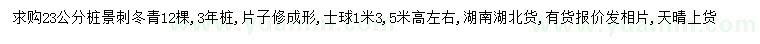 23公分刺冬青桩景