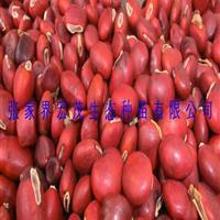 红豆树种子、鄂西红豆何氏红豆、鄂西红豆、江阴红豆、花梨木