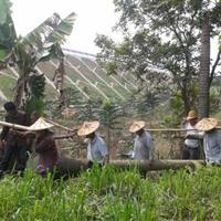 假槟榔―地苗袋苗假植苗―杆高1-10米―清场出售