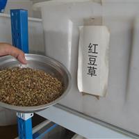红豆草种子批发,向日葵种子批发,水果玉米种子批发