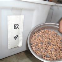 歐李種子價格, 金錢槭種子價格, 草櫻花種子價格
