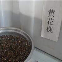 黄花槐  白桦  马甲子种子价格