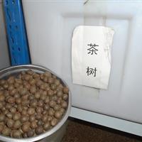 茶树种子价格, 油茶种子价格, 蓝花楹种子价格