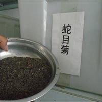 蛇目菊   蛇莓   鼠尾草种子价格