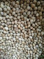 滇润楠种子53一斤供应/滇润楠种子53一斤图片