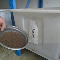 二月兰种子价格,地丁种子价格, 牵牛花种子价格