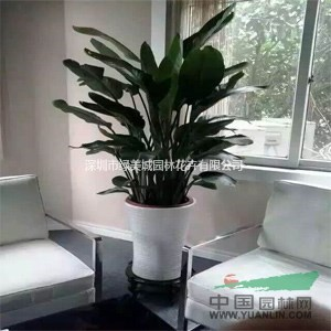 办公室花卉租摆好处 花卉租赁的种植方法