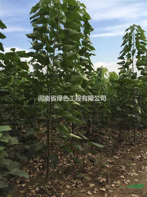 河南省绿色工程有限公司