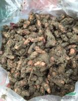 供应紫叶酢浆草容器苗,地栽苗种子50万,质量保证量大从优