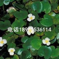 江苏水鳖2最新报价/水鳖2图片